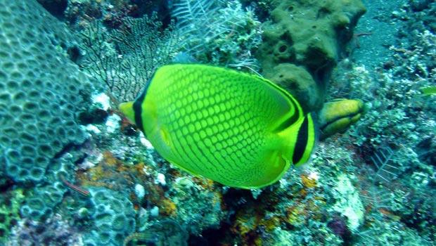 Snorkel Adventure In Tulamben, Bali