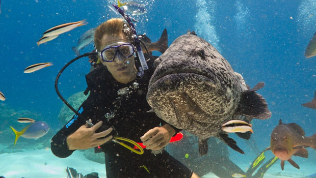 Diver's World Paradise Bali
